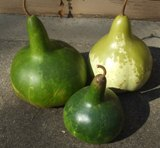 Gourds - Birdhouse - Bradshaw Heirloom Selection
