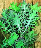 Kale - Red Russian - Organic