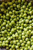 Pea - Garden / English - Lincoln (1/2 Lb)