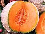 Melon - Cantaloupe - Honey Rock