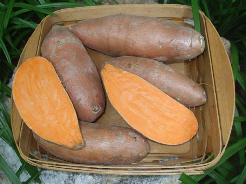 Sweet Potatoes - Choice of 3 Varieties