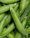 Pea - Garden / English - Wando (½ Lb)